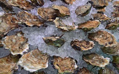 48 Loch Fyne Rock Oysters