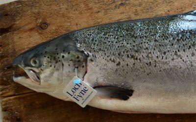 Whole Fresh Salmon (Min 3-4kg)