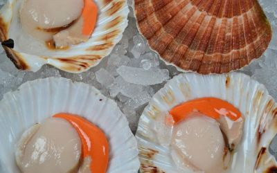 Half Shell Queen Scallops